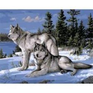 SNOW WOLFES PAINT BY NUMBERS